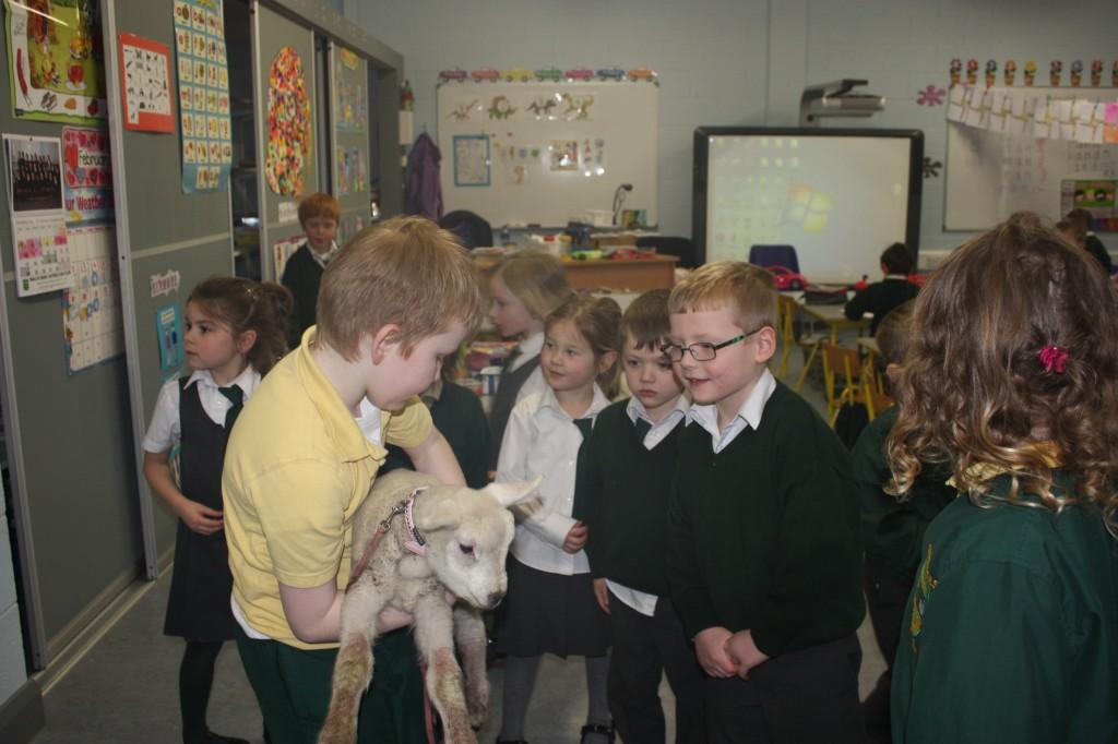 Lamb visit 005