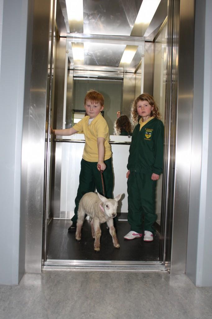 Lamb visit 012
