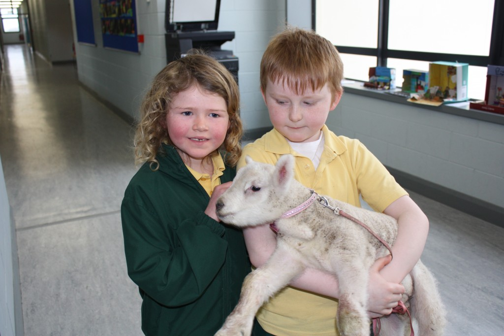 Lamb visit 015
