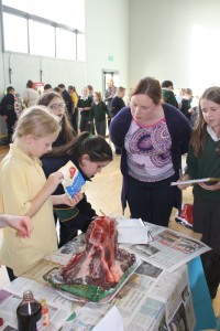 4th Class Science Exhibition 031